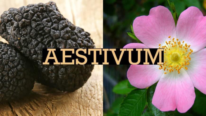 Aestivum, 8a mostra mercato del tartufo estivo e della rosa canina